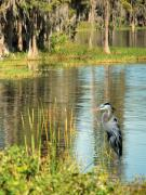 Florida Swamp Photos - A Lovely Day by Adele Moscaritolo