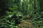 New Britain Photo Prints - A Lush Woodland View In Papua New Print by Klaus Nigge
