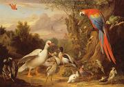 Game Prints - A Macaw - Ducks - Parrots and Other Birds in a Landscape Print by Jakob Bogdani