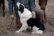 Boarder Prints - A Male Rancher And His Boarder Collie Print by Joel Sartore