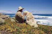 Sheepdogs Art - A Man And His Italian Sheep Dog Sit by Jason Edwards