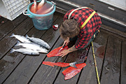 Hartley Posters - A Man Cleans A Sockeye Salmon Poster by Taylor S. Kennedy