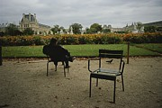 Benches Photos - A Man Reads In The Tuileries Gardens by Raul Touzon