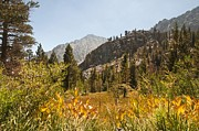 Californian Framed Prints - A Meadow In The High Sierra Nevada Mountains Framed Print by Design Pics / Jack Goldfarb