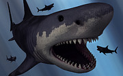 Fish Artwork Posters - A Megalodon Shark From The Cenozoic Era Poster by Mark Stevenson