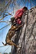 Biting Posters - A Military Working Dog Climbs A Wall Poster by Stocktrek Images