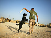Bonding Framed Prints - A Military Working Dog Handler Conducts Framed Print by Stocktrek Images