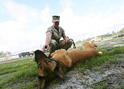 Unity Art - A Military Working Dog Handler Takes by Stocktrek Images