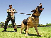 Working Dog Posters - A Military Working Dog Shows His Teeth Poster by Stocktrek Images
