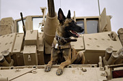 Army Tank Framed Prints - A Military Working Dog Sits On A U.s Framed Print by Stocktrek Images