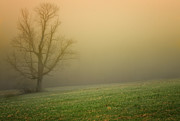 Morning Mist Photos - A Misty Morning by Thomas Schoeller