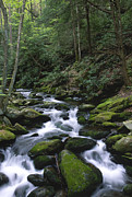 Smoky Mountains Photos - A Moment of Solitude by Sandra Bronstein