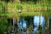 Herons Photos - A Monet Moment by Adele Moscaritolo