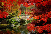 Autumn Water Prints - A Most Beautiful Spot Print by Jon Holiday