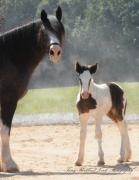 Drum Horse Photos - A Mother and Her Daughter by Terry Kirkland Cook