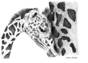 Fauna Drawings Originals - A Mothers Love by Mellissa Bushby
