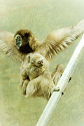 Gibbon Framed Prints - A Mothers Love Framed Print by Trish Tritz
