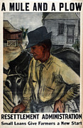 Farm Aid Prints - A Mule And A Plow. Resettlement Print by Everett