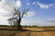 Dirt Roads Photos - A Murray Darling Basin Farm Track by Jason Edwards