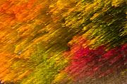 Enigmatic Art - A Natural Fall Abstract by Levin Rodriguez