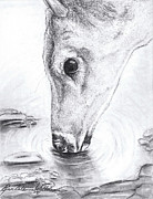 Deer Drinking Water Prints - A Needed Drink Print by Renee Catherine Wittmann