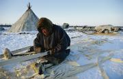 A Nenets Man Works Upon A Wooden Frame Print by Maria Stenzel
