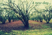 Bare Trees Prints - A new day... Print by Cathie Tyler
