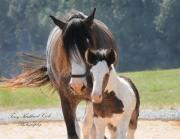 Drum Horse Photos - A New Mother and her Foal by Terry Kirkland Cook