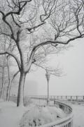 Snow On Branches Prints - A Noreaster in Brooklyn Print by Christopher Kirby