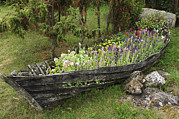 Summer Garden Scene Posters - A Old Wooden Boat Used As A Flower Poster by Keenpress