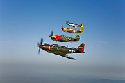 In A Row Art - A P-36 Kingcobra, Two Curtiss P-40n by Scott Germain
