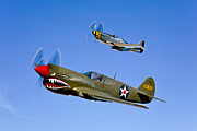 World War One Framed Prints - A P-40e Warhawk And A P-51d Mustang Framed Print by Scott Germain