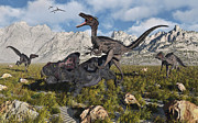 Dromaeosaurid Framed Prints - A Pack Of Velociraptors Attack A Lone Framed Print by Mark Stevenson
