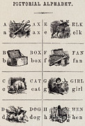 Spelling Framed Prints - A Page From The Pictorial Alphabet Framed Print by Photo Researchers