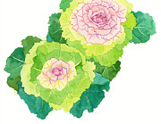 Lettuce Digital Art Framed Prints - A Painting Of Cabbage Flowers Framed Print by Coharu Aya