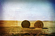 Hay Bales Framed Prints - A Pair Framed Print by Larysa Luciw
