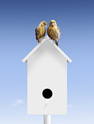 Home Ownership Prints - A Pair Of Birds Sat Close Together On Bird Box Print by Pier