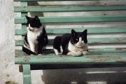 Rhodes Posters - A Pair Of Cats On A Bench Poster by James L. Stanfield