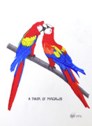 Pen And Ink Framed Prints Art - A Pair Of Macaws by Frederic Kohli