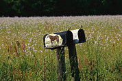 And The Life Prints - A Pair Of Mailboxes Set On The Edge Print by Raymond Gehman