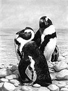 Penguin Drawings Metal Prints - A Pair of Penguins Metal Print by Heather Ward
