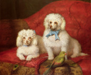 Sofa Framed Prints - A Pair of Poodles Framed Print by English School