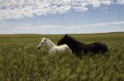 Young Horses Photos - A Pair Of Protected Wild Horse Foals by Melissa Farlow