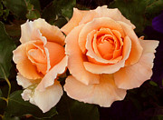 Tangerine Paintings - A Pair of Tangerine Roses by Larry Frazier