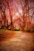 Cherry Blossom Trees Prints - A Path To Fantasy - Holmdel Park Print by Angie McKenzie