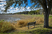 Florida Landscape Framed Prints - A Peaceful Place Framed Print by Carolyn Marshall