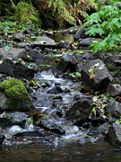 Neurotic Images Photography Prints - A Peaceful Stream Print by Chalet Roome-Rigdon