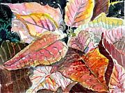 A Peach Of A Poinsettia Print by Mindy Newman