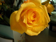 Bonita Waitl - A Perfect Yellow Rose