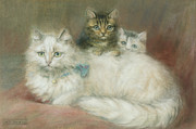 Long Haired Cat Posters - A Persian Cat and Her Kittens Poster by Maud D Heaps